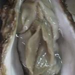 女性器そっくりな牡蠣
