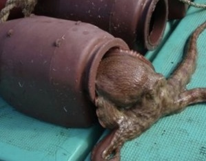 『タコつぼ』という名器のネーミングの元になっている蛸壺