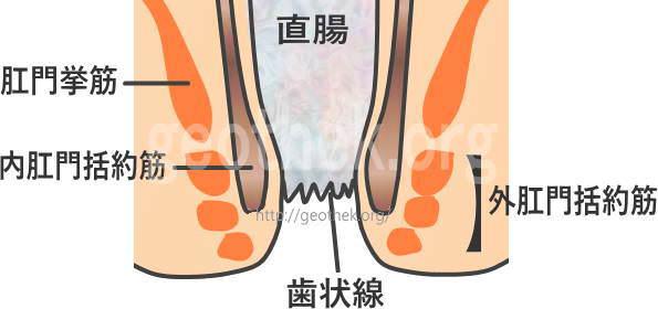 肛門の筋肉の構造