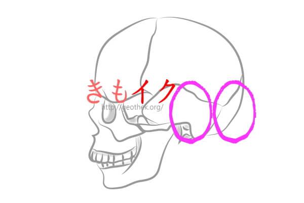 頭の性感帯の部分